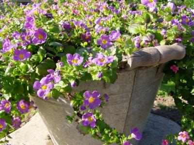 Renlige sommerblomster
