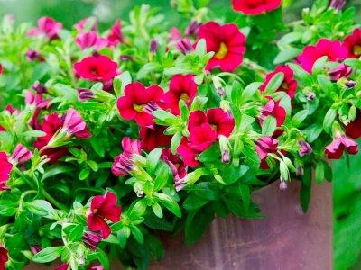 Blomstrende glæde hele sommeren