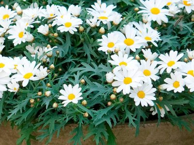 Planter i krukker