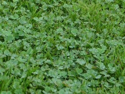 Få mere liv i græsplænen