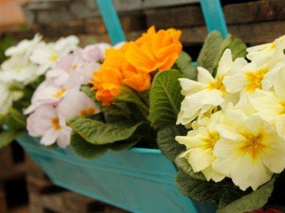 Forår i krukker og spande